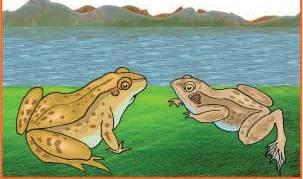 azim ve kararlılık 2 kurbağa
